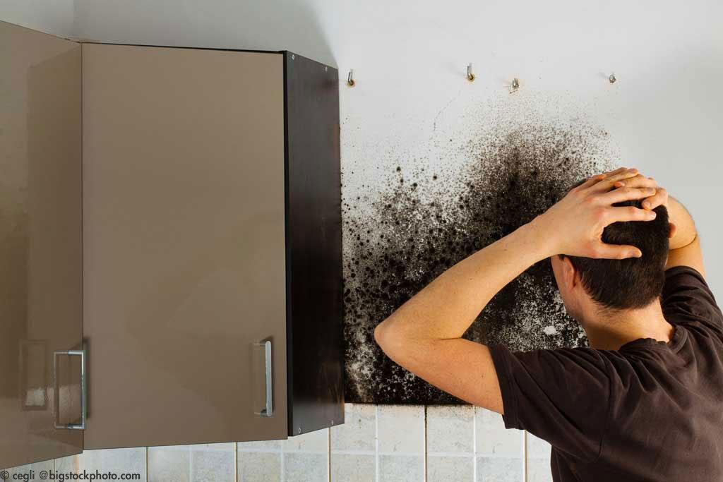 schimmel was hilft gegen schimmel r k werterhaltung gmbh r k werterhaltung. Black Bedroom Furniture Sets. Home Design Ideas