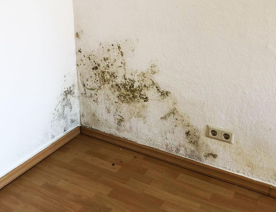 Sie sollten Ihr Haus trockenlegen, wenn Sie Schimmel an der Trockenbauwand entdecken